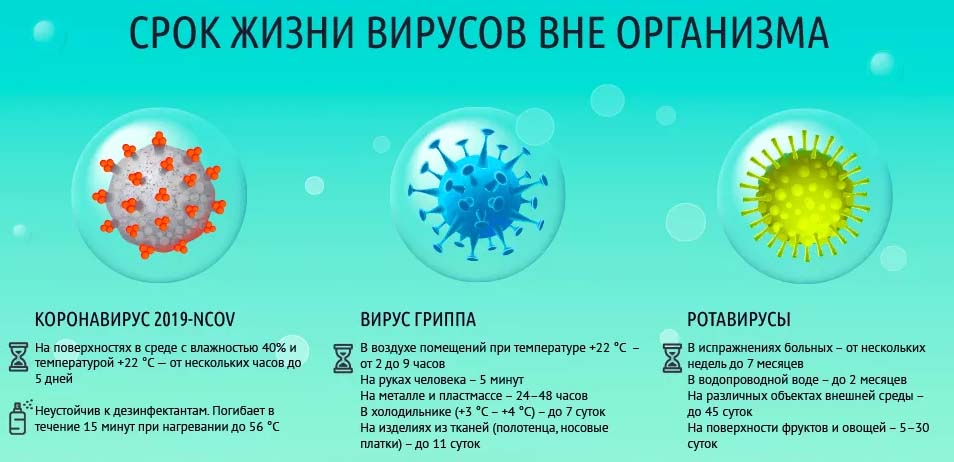 Srok-zhizni-virusov-vne-organizma.jpg